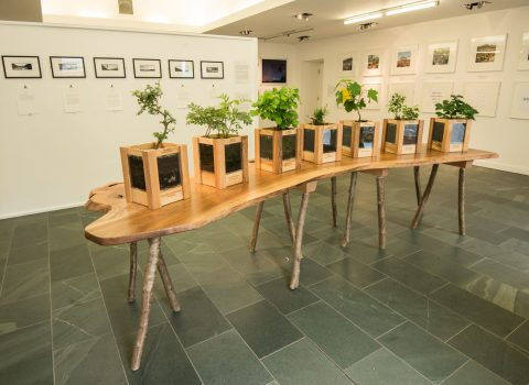 The Long View – Slabtable and Tree Planters